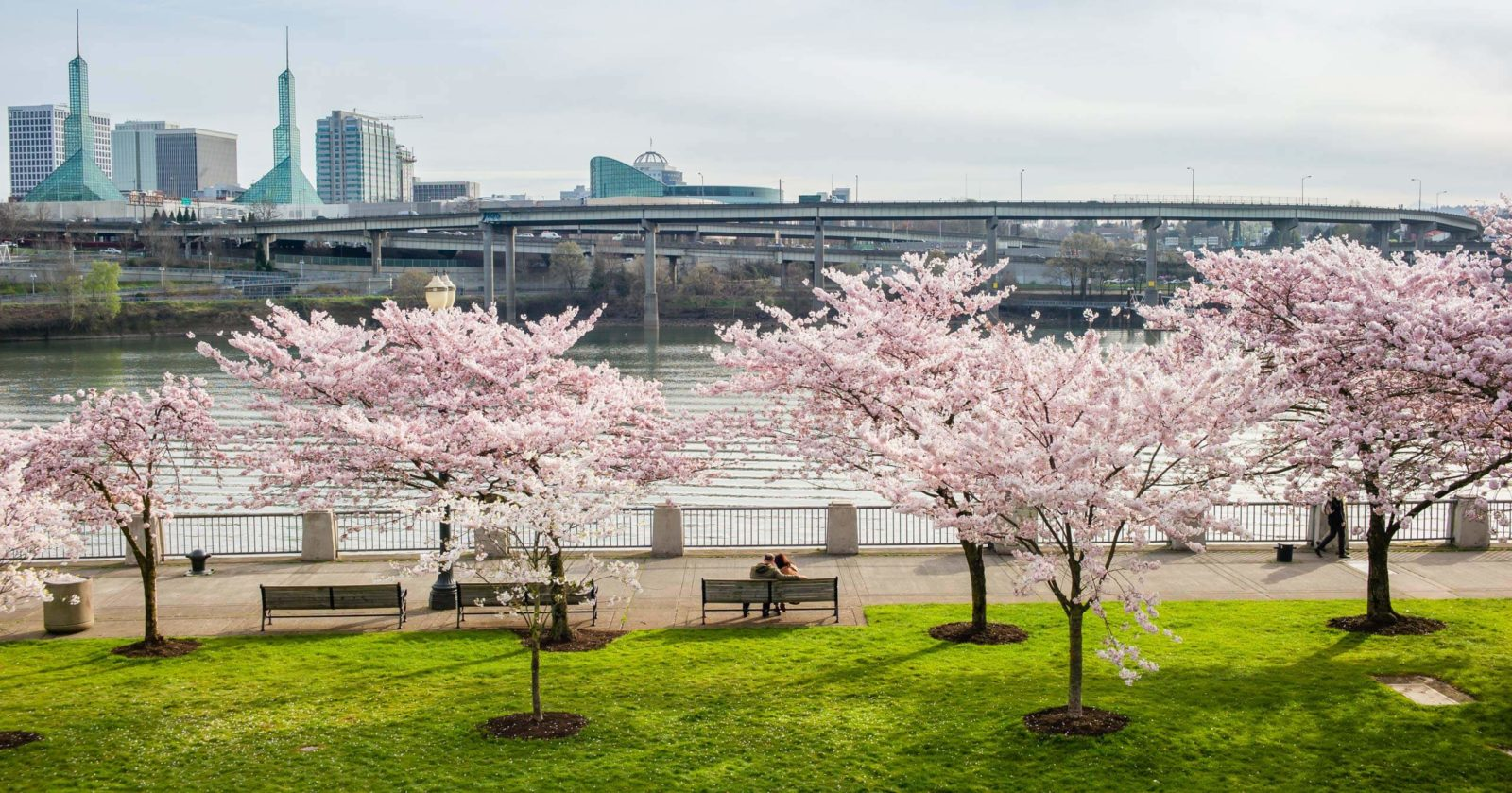 Portland Waterfront with Cherry Blossom trees